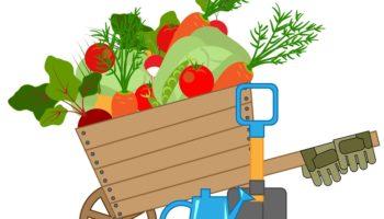 Главные правила лунного календаря огородника в Беларуси